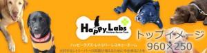 レトリバーレスキューチームHappyLabs~すべてのレトリバーの笑顔のために。 ~