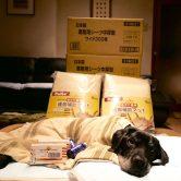 リッキーご支援のお礼と保護犬欲しいものリストについて